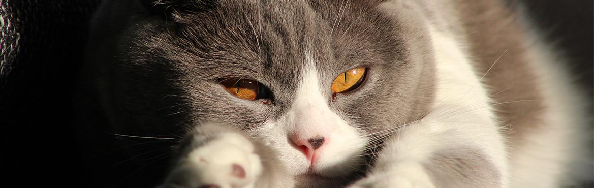 Tierarzt Frankfurt Katze