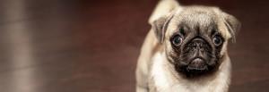 Behandlung von Hunden Frankfurt